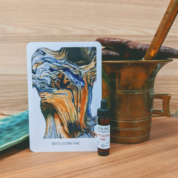 Photo of Bristlecone Pine essence card and bottle