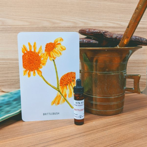 Photo of Brittlebush essence card and bottle