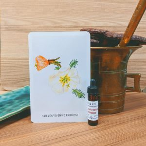 Photo of Cut Leaf Evening Primrose essence card and bottle