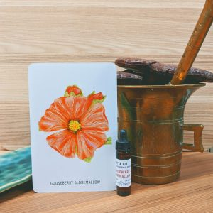 Photo of Gooseberry Globemallow essence card and bottle
