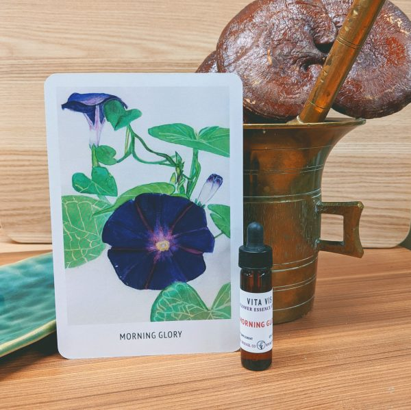 Photo of Morning Glory essence card and bottle