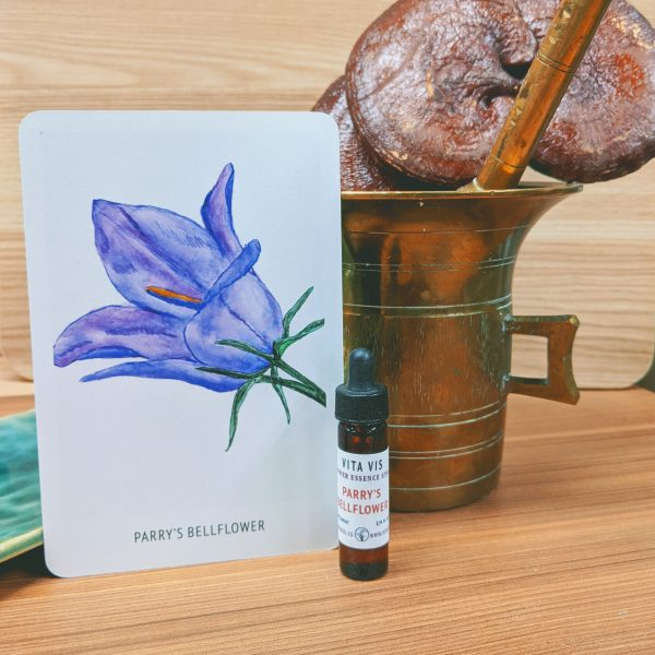 Photo of Parry's Bellflower essence card and bottle