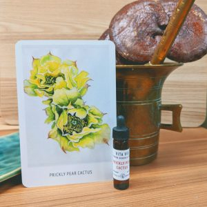 Photo of Prickly Pear Cactus essence card and bottle