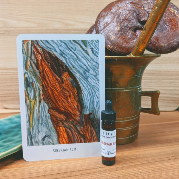 Photo of Siberian Elm essence card and bottle