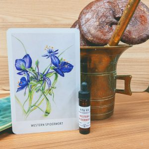 Photo of Western Spiderwort essence card and bottle
