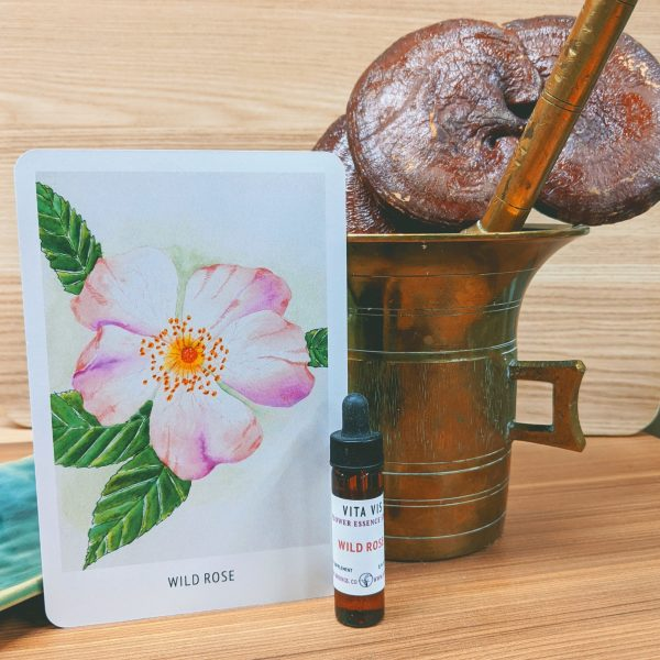 Photo of Wild Rose essence card and bottle