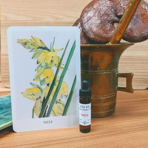 Photo of Yucca essence card and bottle